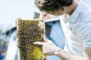 Die Microtronics Bienen mit ihrem Imker Lukas Enengel
